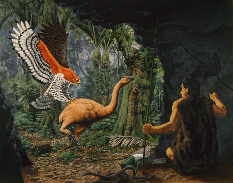 Haast eagle - Birds, Mana and Maori Culture