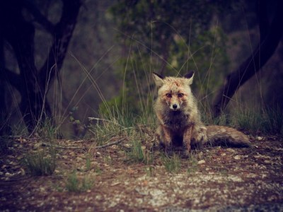 Artists & Writers in Their Own Words: Evaldas Azbukauskas AKA Giriu Dvasios fox in woods