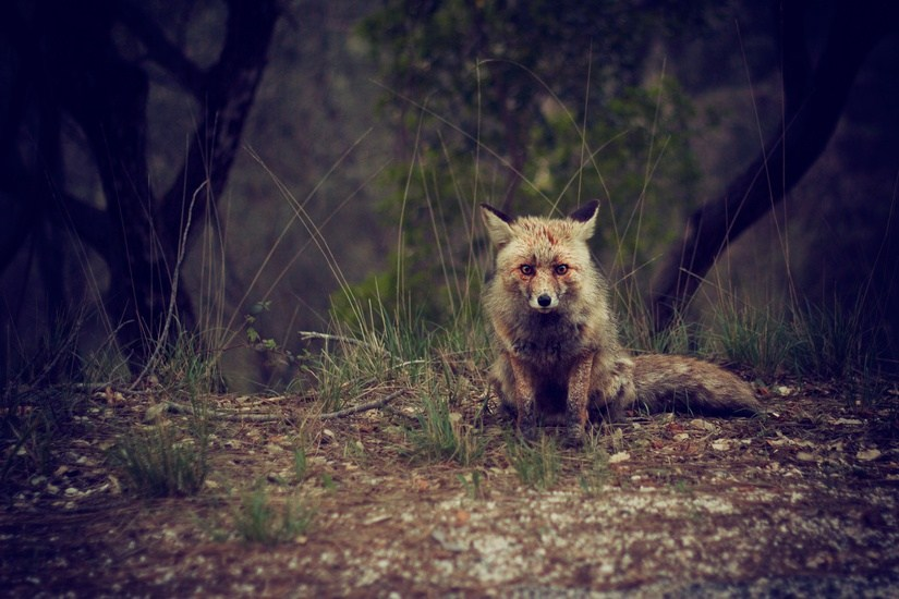 Artists & Writers in Their Own Words: Evaldas Azbukauskas AKA Giriu Dvasios fox in woods