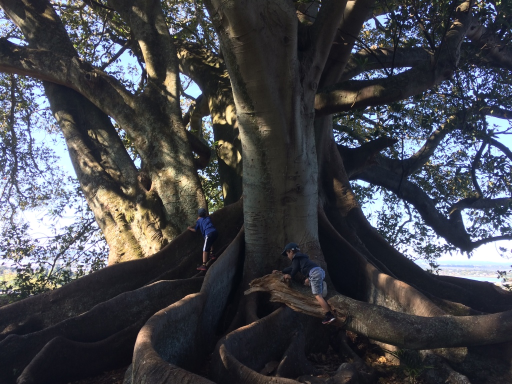 Monte Cecilia Park: My kids are just climbing the tree here.  I am very attached to this particular tree, and I sometimes go there when I feel stuck creatively or in life.  The tree listens and heals my heart 😊