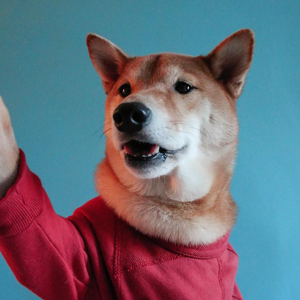 Menswear Dog Is Dripping With Badassery
