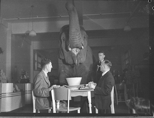 Every Picture Tells A Story: The Elephant in the Tea Room (1939)