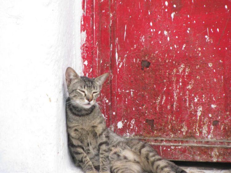 Mysterious cat in Chefchauoen