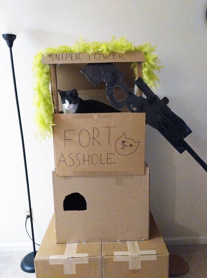 Is your cat a little asshole? Maybe build a fort for him!