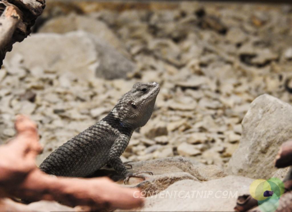 Lizard Warsaw Zoo Copyright Content Catnip 2019