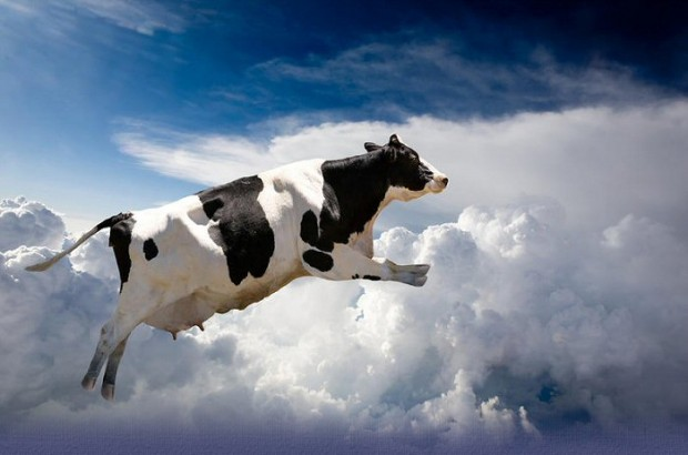 Lost With No GPS or Compass? Just Look For A Cow In A Field!