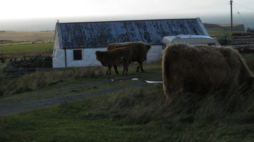 A placid and beautiful Highland Cow, found roaming on the Isle of Skye. Copyright Content Catnip 2010.