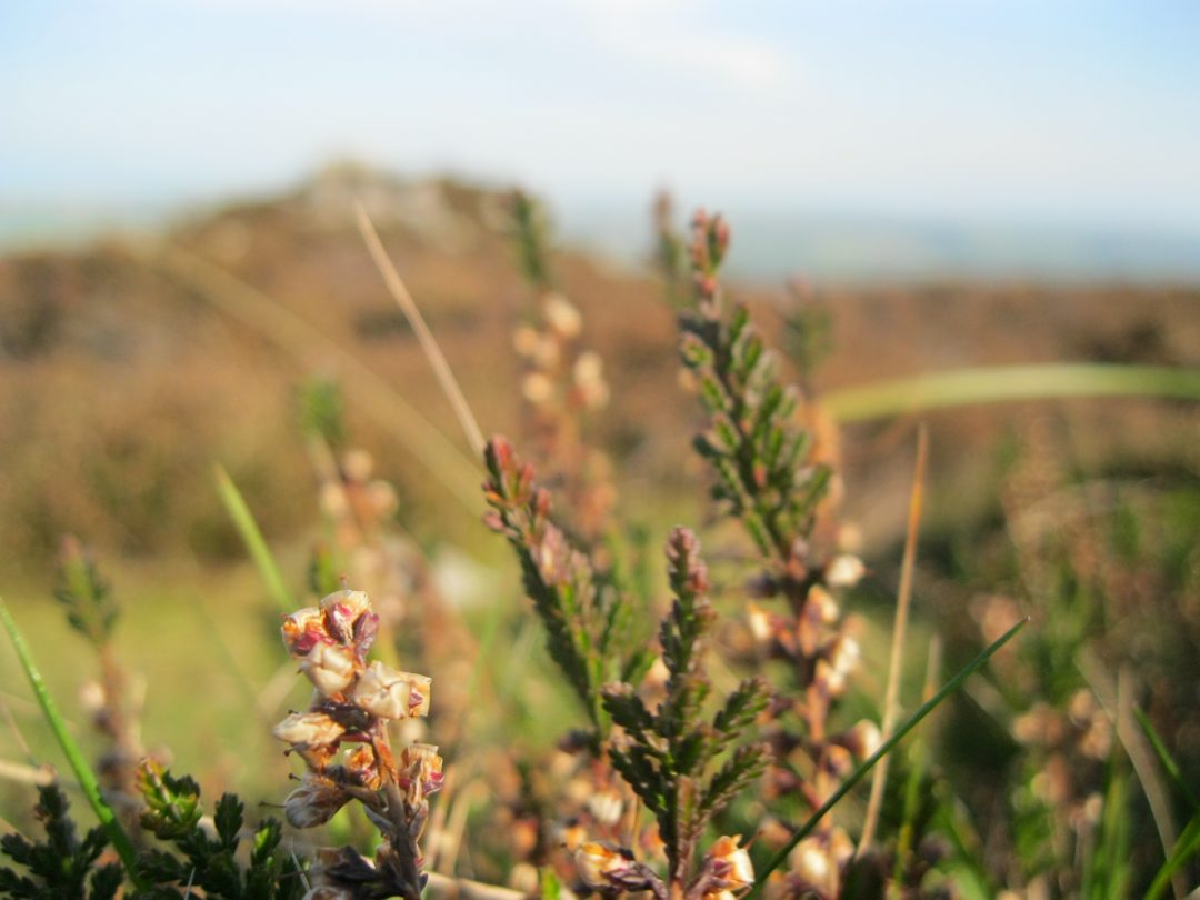 Travel: Meandering around the Mynydd Carningli neolithic hillfort