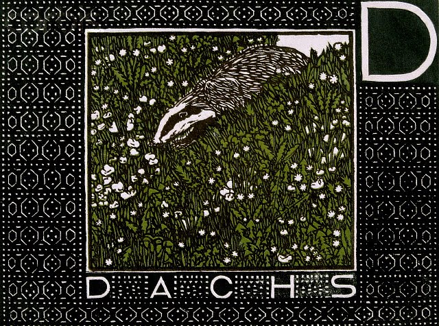 D is for Dachs (the German word for badger)