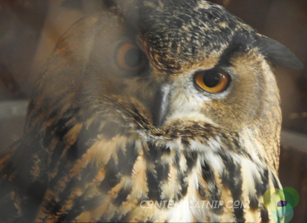 Owl Warsaw Zoo Copyright Content Catnip 2019