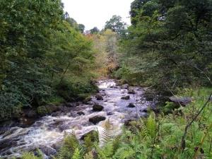 Campsie Glen, Scotland