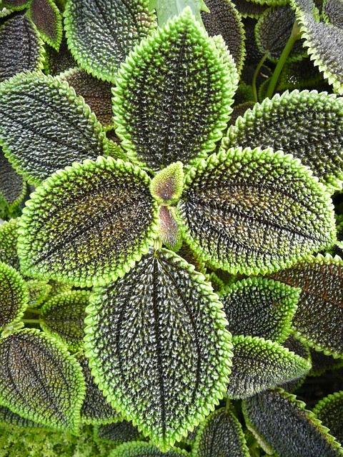 The Transformative Powers of Herbal Tea