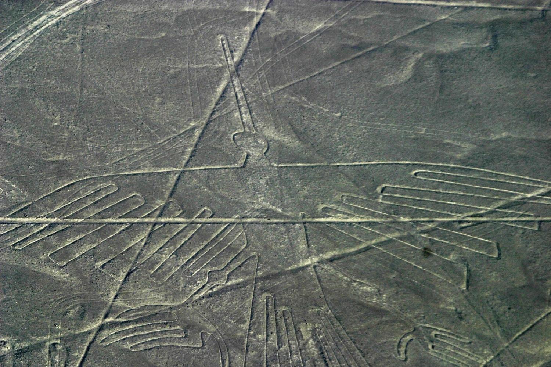 The Condor - Nazca Lines in Peru