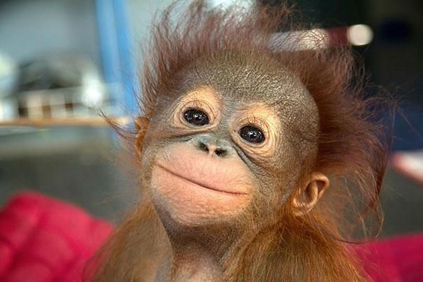 How you can fight against the palm oil industry and help orangutans