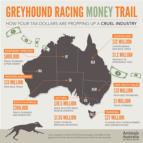 The Truth About Greyhound Racing in Australia