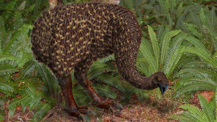 Moa - Birds, Mana and Maori Culture
