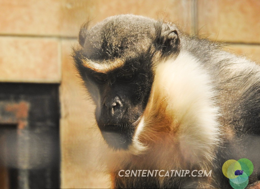 Monkeys with sad faces Warsaw Zoo Copyright Content Catnip 2019