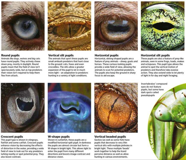 Amazing animal eye adaptations