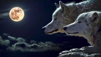 Ancient word of the day - Dam wolf moon
