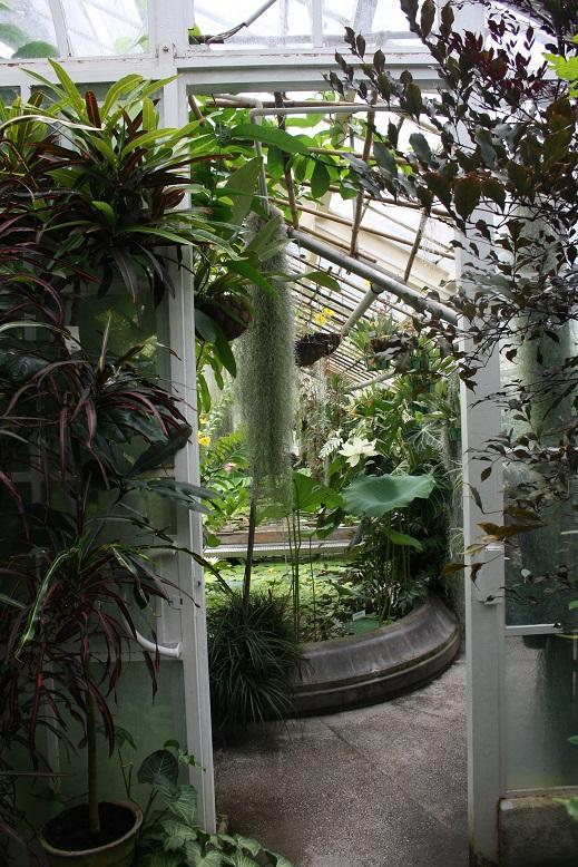 The Enchanting Ogród Botaniczny of Kraków