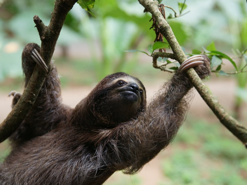 Sloths get rewarded for being exceedingly lazy