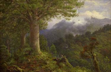 What New Zealand native species are you? Kauri