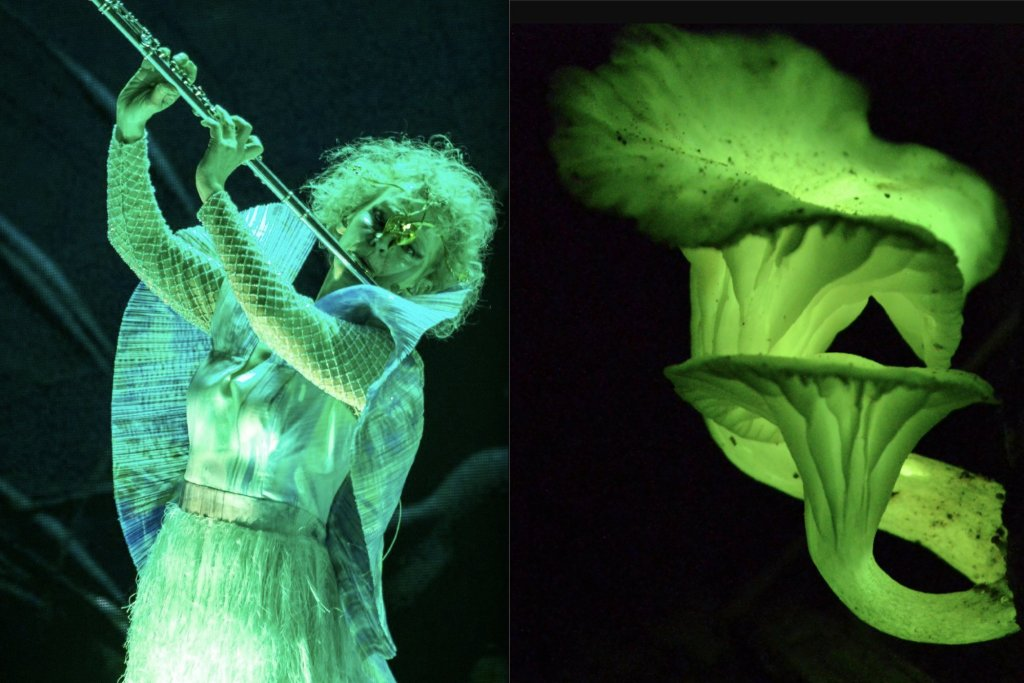 Björk as extravagant fungi