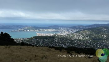 Looking down on epic Wellington from Mt Kaukau