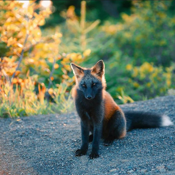 The real life Mozilla Firefox is mysterious AF