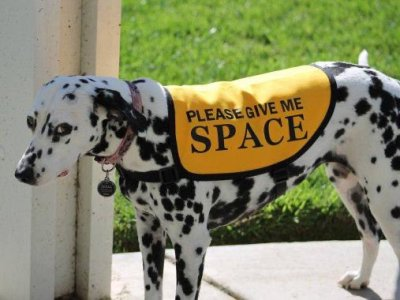 Give me space shy introverted dog