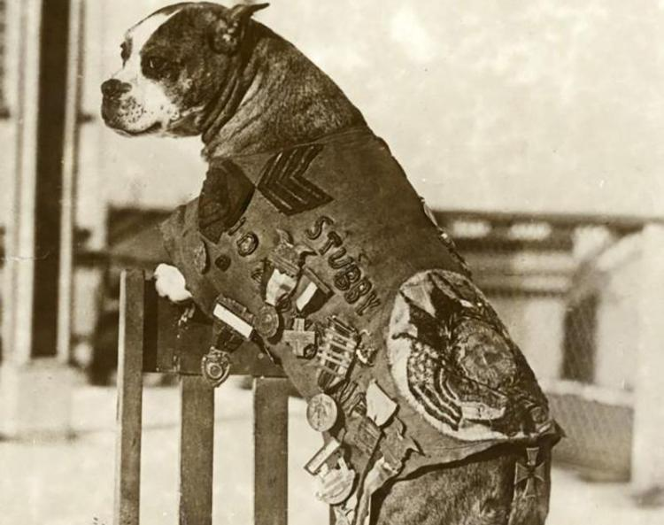 Sargeant Stubby was the bravest soldier on four paws