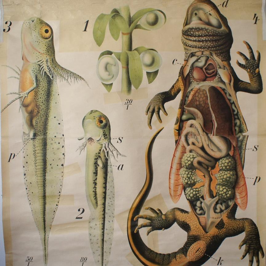 Aliens among us by Paul Pfurtscheller