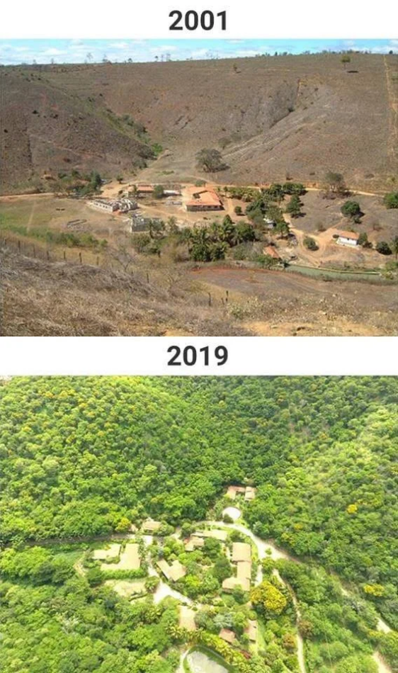 Couple creates a forest in 18 years