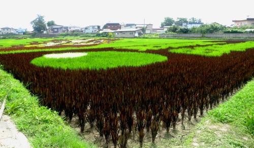 Inakadate's amazing rice art