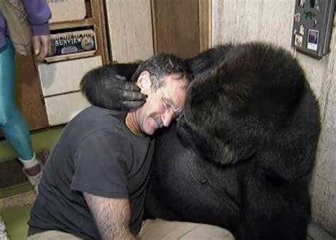 When twin souls meet: Robin Williams met Koko the Gorilla